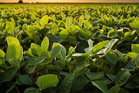 Fertilidade do solo e nutrição de plantas